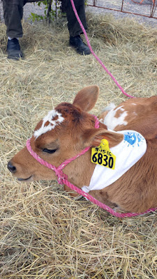 Portland Monthly Country Brunch 2016 - Sandy, Sunshine Dairy's newest fuzzy friend