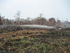 Fighting peatland forest fires (CmE)