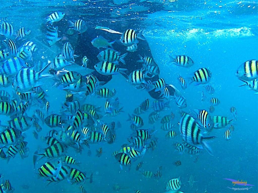 pulau harapan, 6-7 juni 2015 samsung gopro be 23