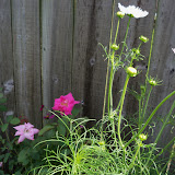 Gardening 2010, Part Three - 101_5008.JPG