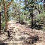 along Pearl Beach / Patonga fire trail (219410)