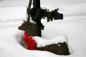 Snow-covered reindeer