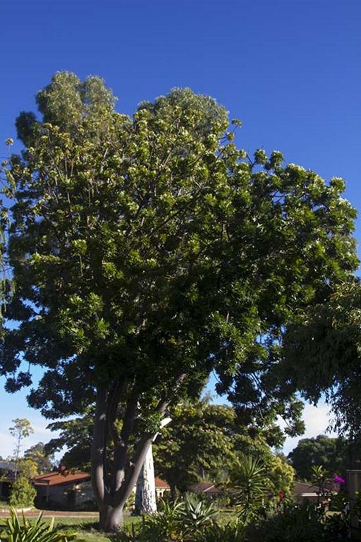 [tree%5B4%5D]