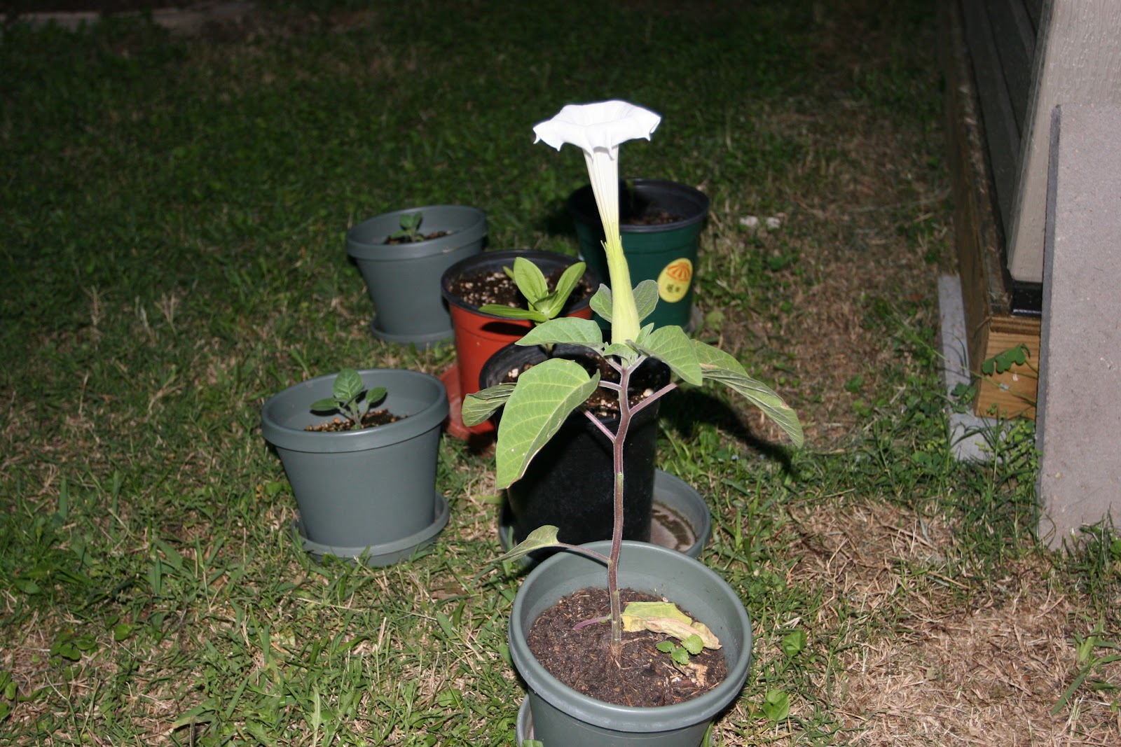 Gardening 2012 - IMG_3080.JPG