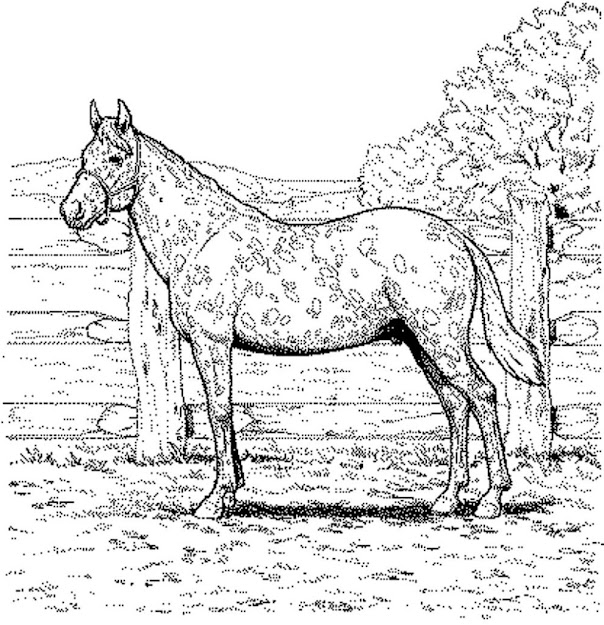 Free Coloring Pages Of Horses Printable Kids Colouring Pages Horse  Colouring Pages For Adults Free Printable Horse Coloring Pages For Adults