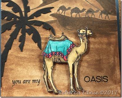 c4c 18 camel train3