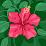 Allie Sanchez's profile photo