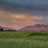 Amber Waves Missoula, Montana ©Mark Mesenko. Prints available at www.mesenko.com