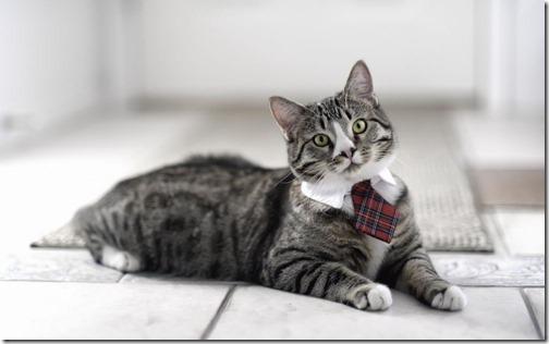22 fotos de gats (5)