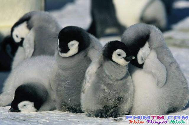 Xem Phim Hành Khúc Chim Cánh Cụt - March Of The Penguins - phimtm.com - Ảnh 1
