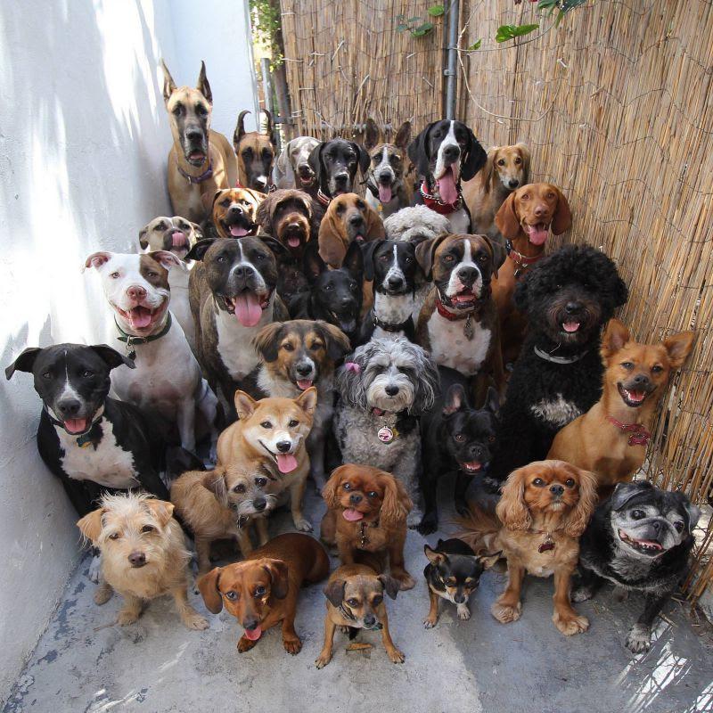 Cuộc thi Miss Dog