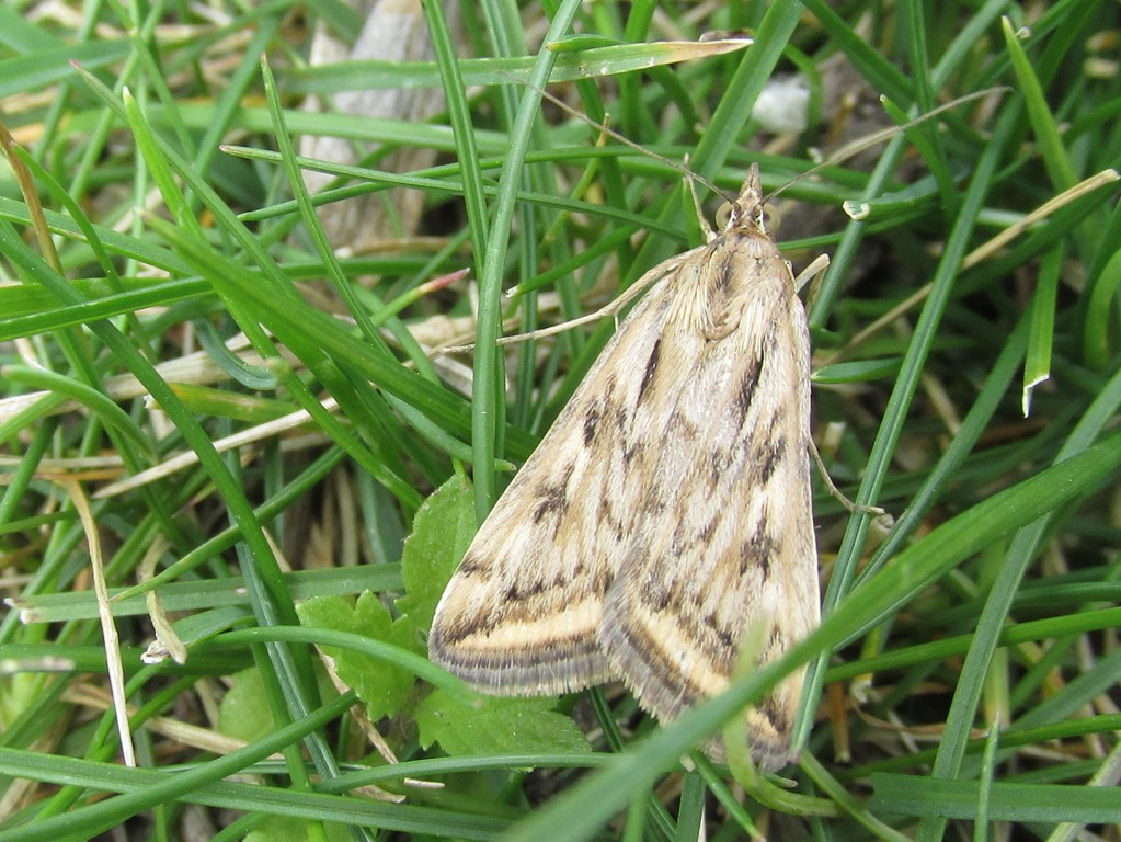 [IMG_0426-Unknown-Moth-46]