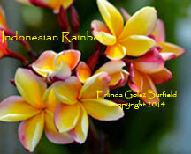 Photo: Indonesian Rainbow_Erlinda Golez Burfield_2014