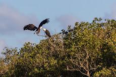 and eagle family