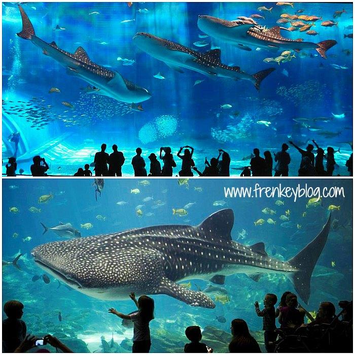 Whale Shark ( Hiu Paus ) ~ Osaka Aquarium Kaiyukan