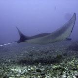 Diving and Snorkeling Gilis, Near Sumbawa and Komodo National Park
