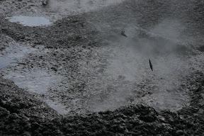 Spurts of mud, Ngamokaiakoko mudpool