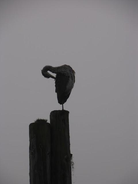 Silhouette of grooming bird / Credit: Peter James Photography Studio