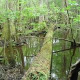 4 Holes Swamp 010.jpg