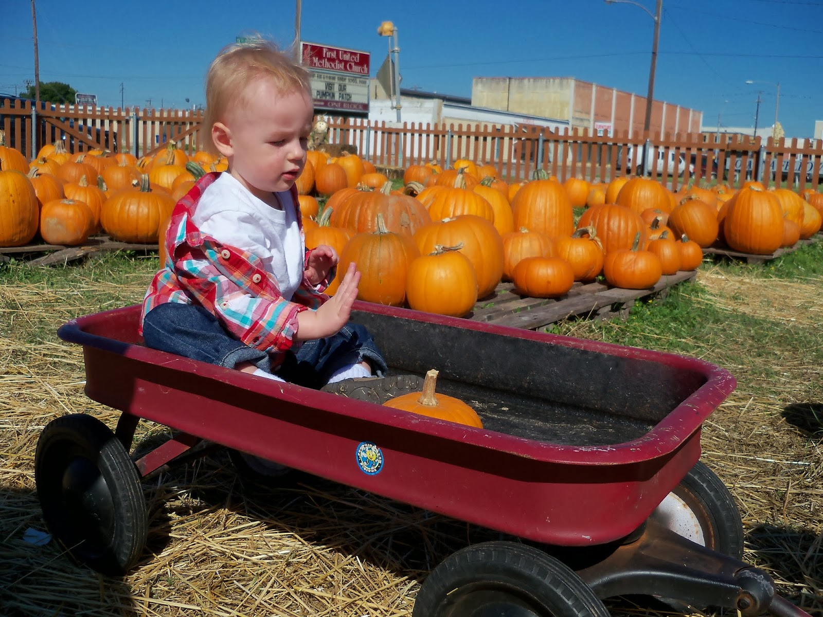 Pumpkin Patch - 115_8256.JPG