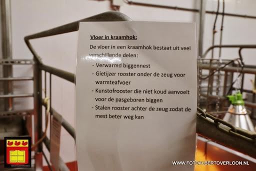 Open dag varkensbedrijf molenpas overloon 29-06-2013 (11).JPG