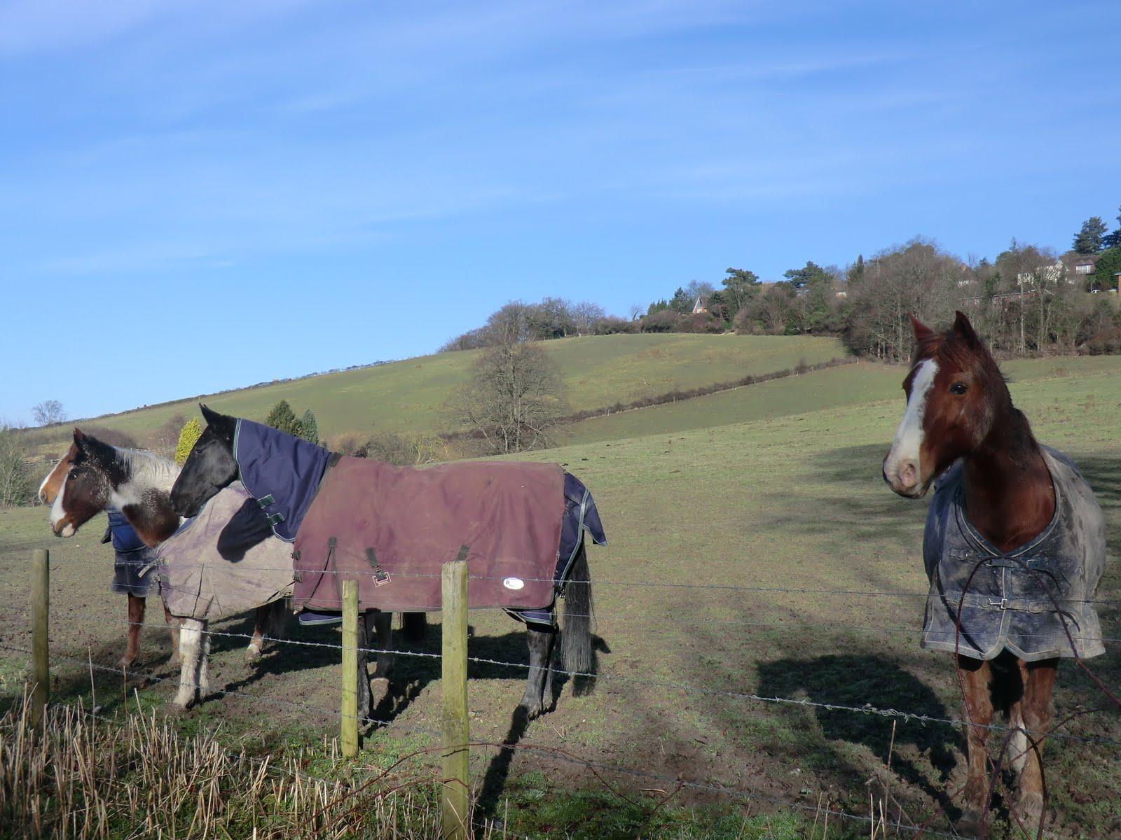 CIMG5127 Horses on Church Road