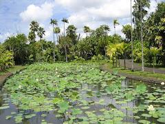 Visiter Le jardin botanique de Pamplemousses