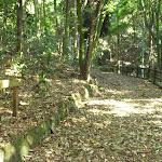 Leafy trail close to the Rain Forest Picnic Area in the Blackbutt Reserve (399784)