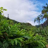 06-26-13 National Tropical Botantial Gardens - IMGP9462.JPG