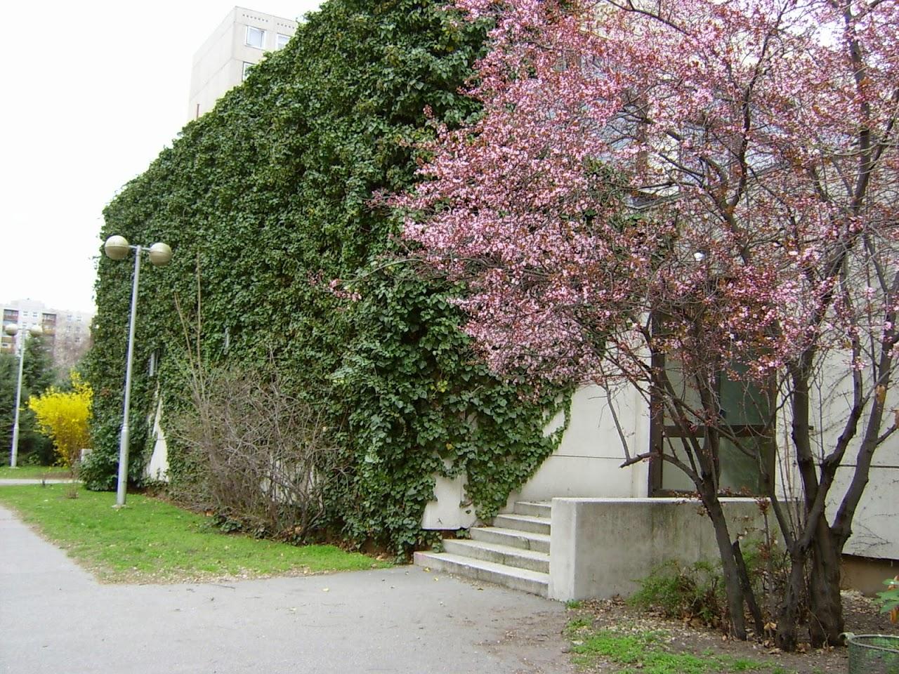 Képek az iskoláról - image011.jpg