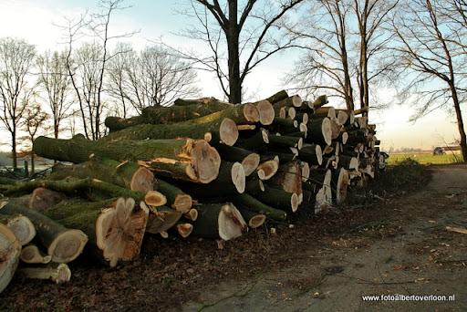 Houtoogst in de bossen van overloon 17-01-2012 (20).JPG