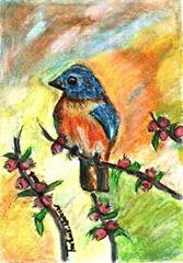 571 Blue Bird