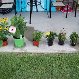 Gardening 2009 - 101_4638.JPG