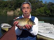 八潮金曜会の平野さん、40cmの大型 (2013.4.12)