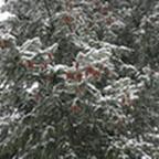 tn_lachaux-2010-12-14.jpg