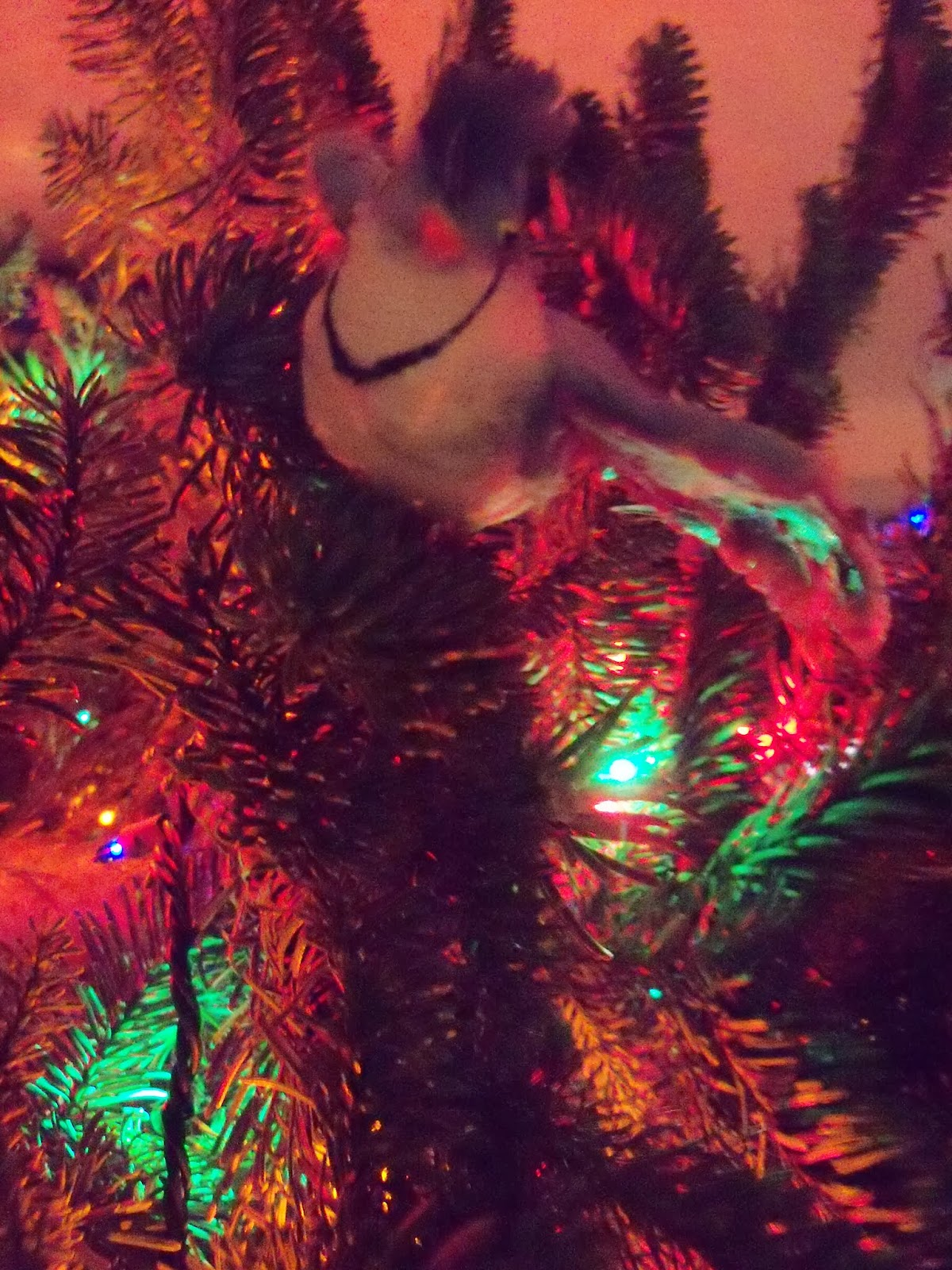 Christmas Lights - 115_9054.JPG