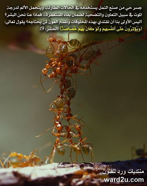 اعجاز القرآن الكريم فى صور