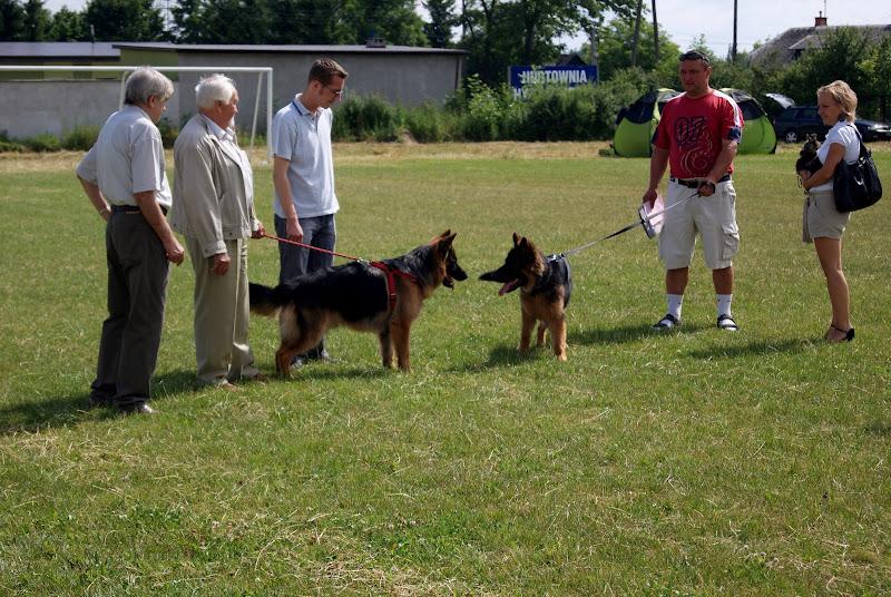 Wystawa psów - dsc00307.jpg