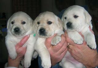 3 of Asti's boys.