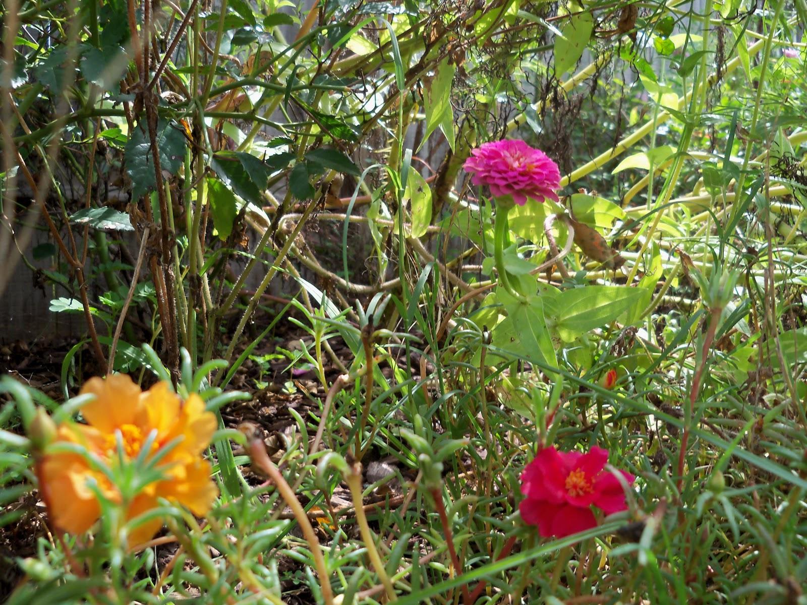 Gardening 2010, Part Three - 101_5190.JPG