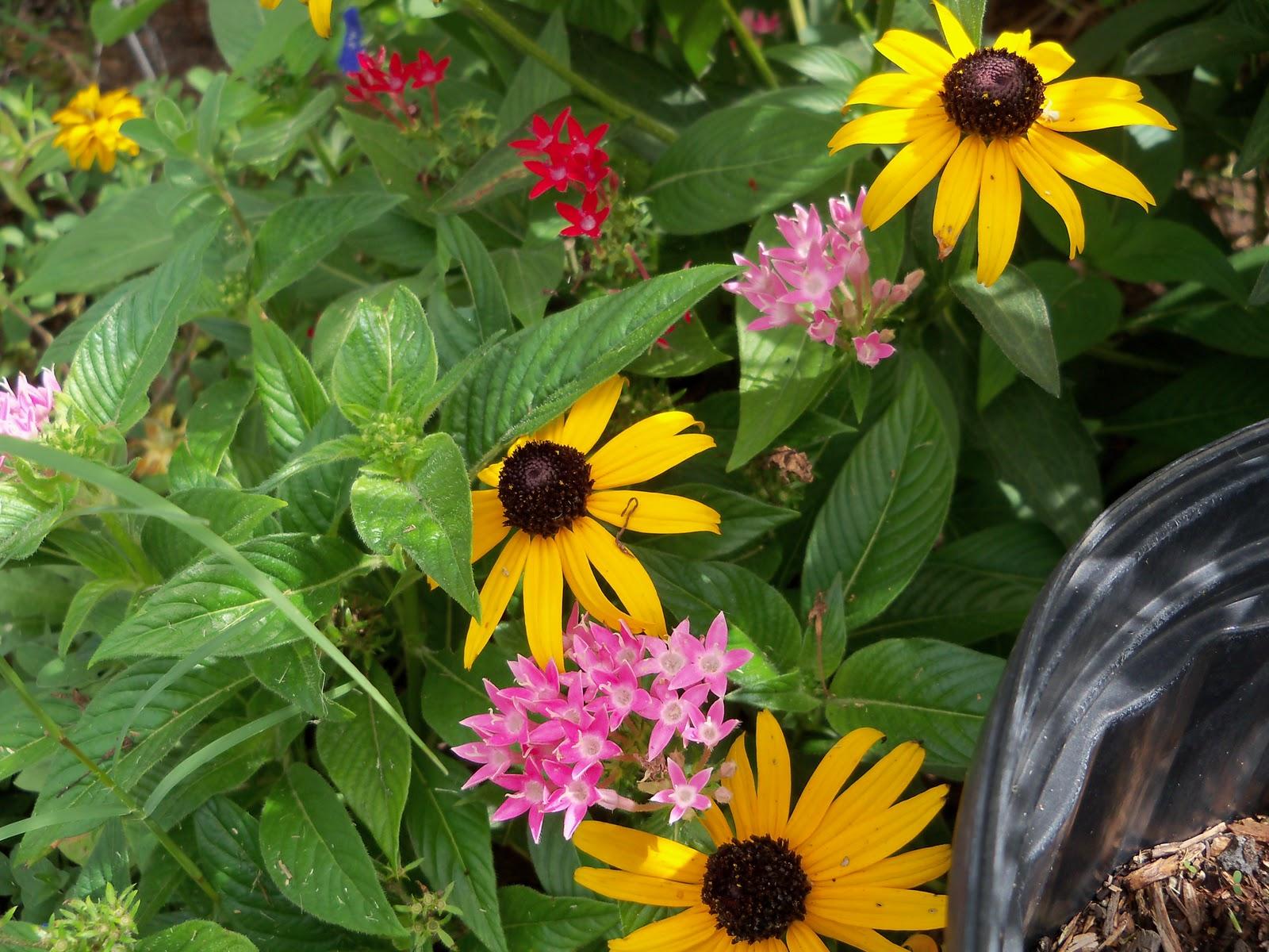 Gardening 2010, Part Three - 101_5287.JPG