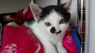 ケンカばかりの猫同士がとっても仲良くなる!すごい対策方法7