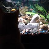 Fish - IMG_20121230_181941.jpg