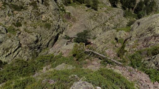 Descente de la vire oblique de Serra Pianella en vue des bergeries de Laoscella