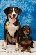 Huisdierreportage Hondendag Uden Dierendag (4 oktober 2008) - 19