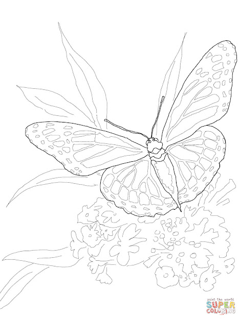 Click The Monarch Butterfly Coloring Pages To View Printable Version Or  Color It Online Patible With Ipad And Android Tablets