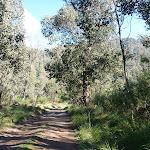 Trail near Old Geehi Hut (294277)