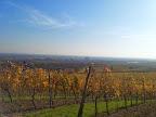 In den Weingärten rund um Thallern