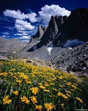 Photo: yellow flowers and Warbonnet Peak, Cirque of the Towers - August