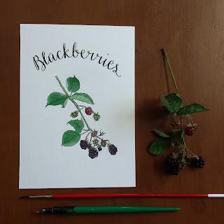 www.AliceDrawsTheLine.co.uk :: Blackberries